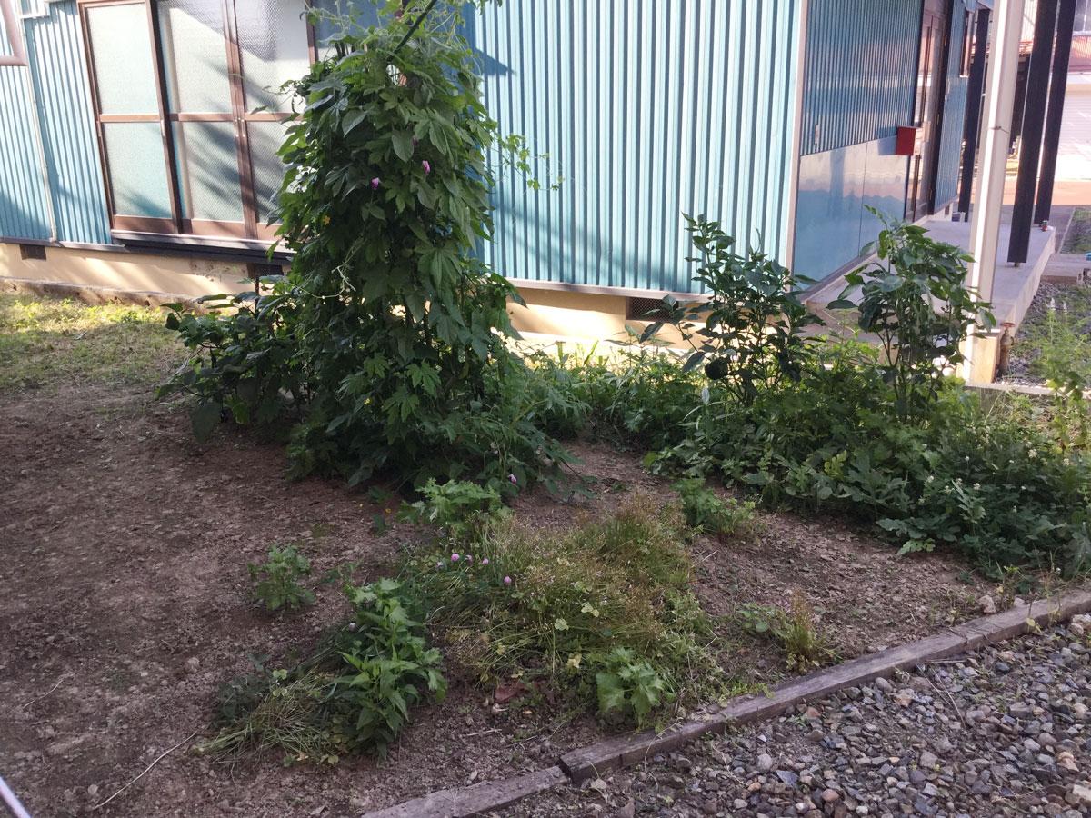 野菜の栽培
